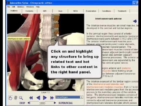 Interactive anatomy software