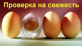 Как определить свежесть яиц?