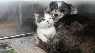 【感動実話】見捨てられた子猫を守り続けた犬の姿に涙腺崩壊・・・