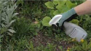 Gardening Basics : How to Kill Grass Roots in a Garden