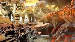 Кто же они, эти коты-герои?