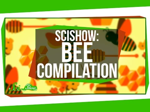 SciShow: Bees Compilation