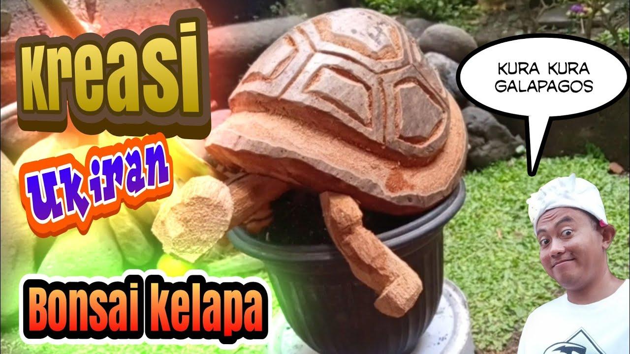 Kreasi Ukiran Bonsai Kelapa Kura Kura Galapagos Youtube