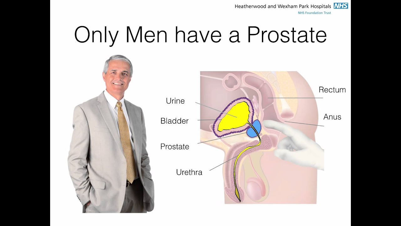 Where is the prostate