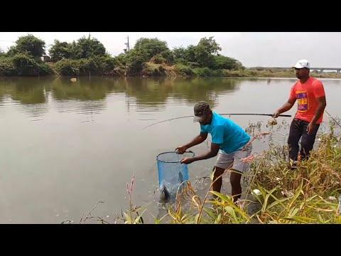 Fish Hunting || Amazing Fishing