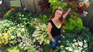 Drone View of Shawna Coronado's Garden