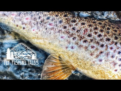 Fly Fishing Tales #5 // Dry Fly Trouts