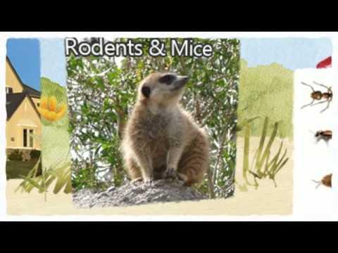 Pest Control Stockton CA Video 209-456-5665 Bed Bug Problems