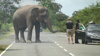 Gambar cover Wild elephant waiting for food !