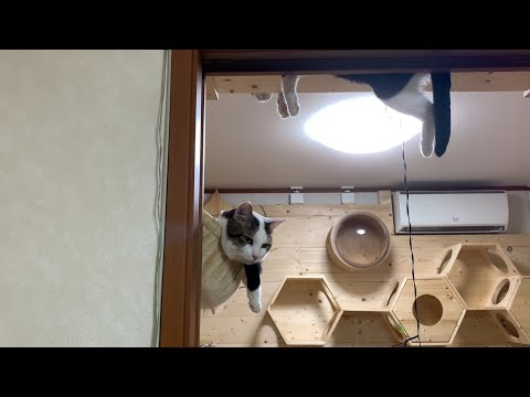クスっと笑えるひのき猫短編集 Part12