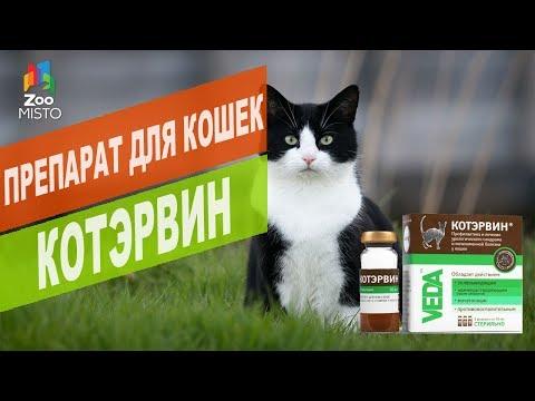 Как принимать котэрвин коту