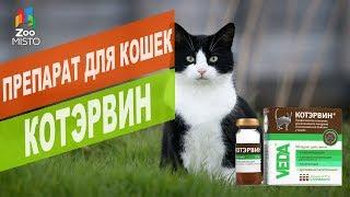 Препарат для кошек КОТЭРВИН | Обзор препарата для кошек КОТЭРВИН