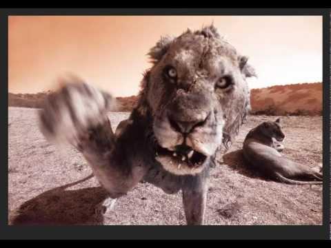 Aaron Chang's Best Work - Wild Lion in Africa