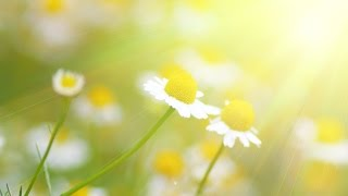 Peaceful Music, Relaxing Music, Instrumental Music, 'Golden Meadow' by Tim Janis