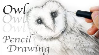 Sketch of Owl - Realistic Owl Drawing - How to Draw an Owl Tyto 貓頭鷹手繪 素描 鉛筆畫 猴面鷹 フクロウを描く