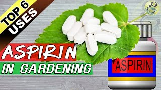 ASPIRIN HACKS ON PLANTS and GARDENING:  Top 6 Benefits of Aspirin as Rooting Hormone + Others