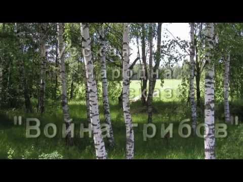 Русская народная сказка - Война грибов