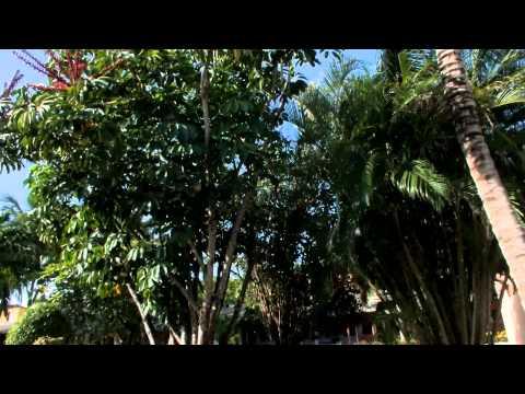 Видео Каталония баваро бич гольф казино резорт