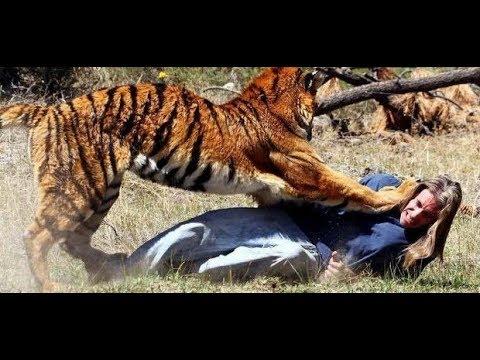 آخطر الحيوانات المفترسة على البشر وثائقي صراع بين وحوش الغابة National Geographie Abudabi Youtube