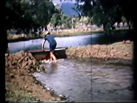 P A Yeomans-Keyline in New Caledonia (20 min) 1965