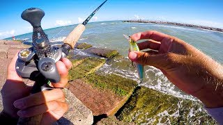 Fishing packery jetties, Corpus christi, texas for a species that I...