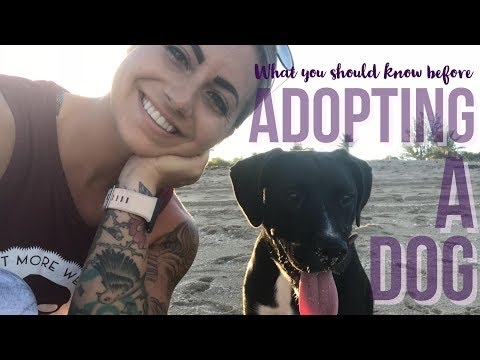 Are You Ready To Adopt A Rescue Dog? (What I Wish I Knew Beforehand)