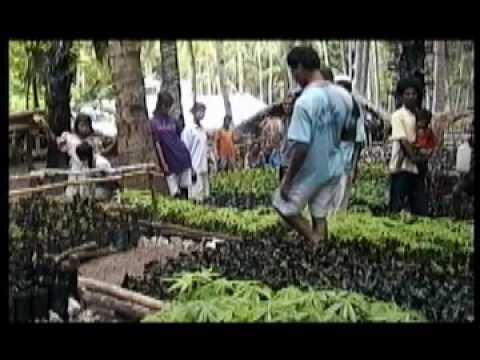 Pitalari Plant Nursery in East Timor