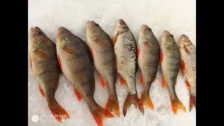 Зимняя Рыбалка в Февраля 2020