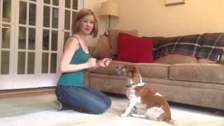 Raise The Woof Dog Training Tips And Tricks: Shake