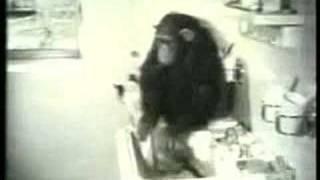 Monkey Washing Cat (extended)