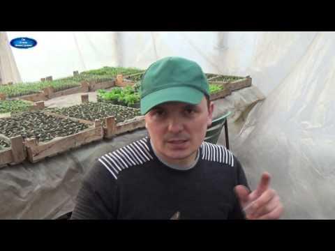 ПРАВИЛЬНЫЙ ПОСЕВ БАКЛАЖАНОВ! ЧАСТЬ 1. ВЫРАЩИВАНИЕ РАССАДЫ БАКЛАЖАН. | пикирование | выращивание | баклажанов | вырастить | баклажаны | баклажан | рассаду | посеять | баклажа | посев