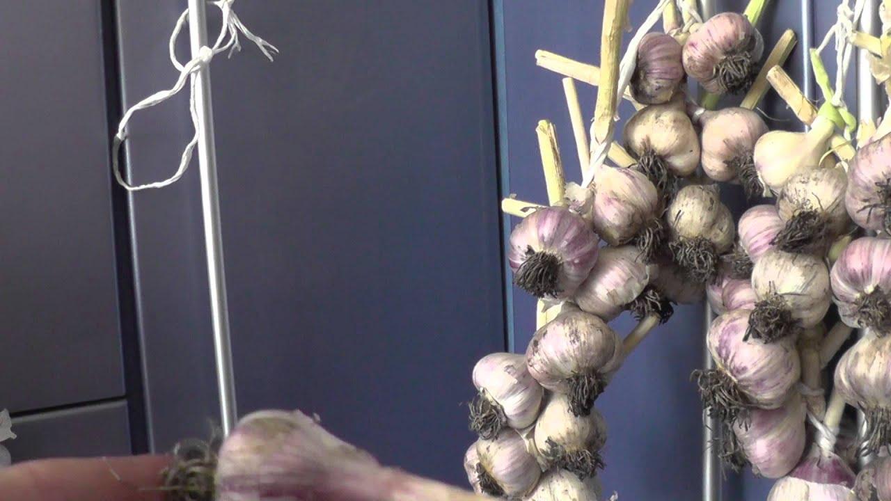 Как вязать косы из чеснока