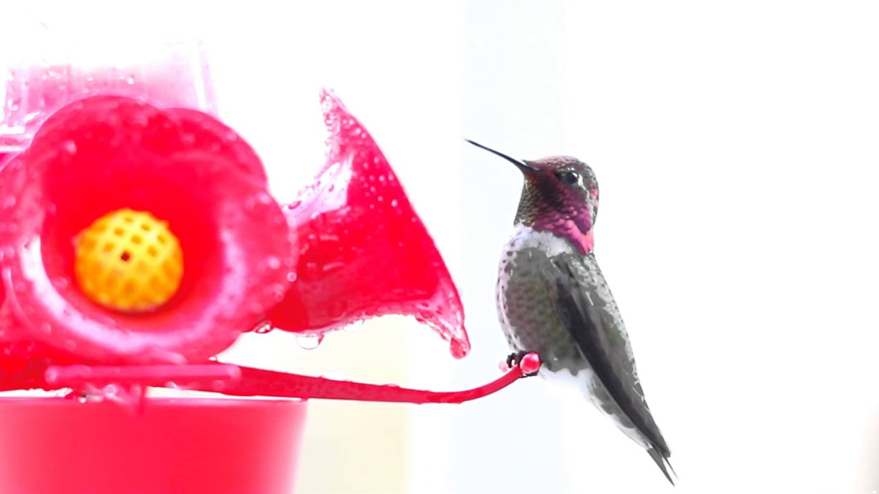 Hummingbird vibrator sheknows