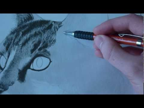 how to draw animal fur cats youtube