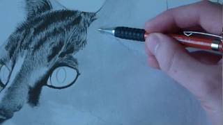 How to Draw Animal Fur (Cats)