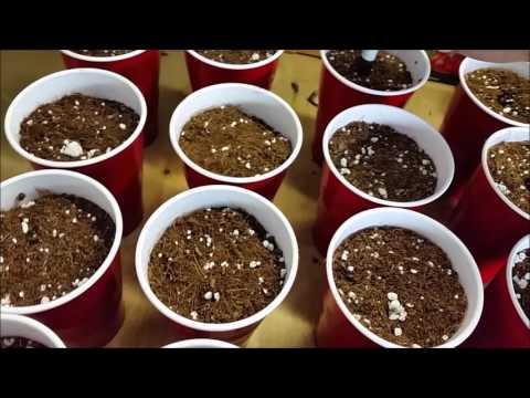 How to Grow Medical Marijuana Start to Finish ep1