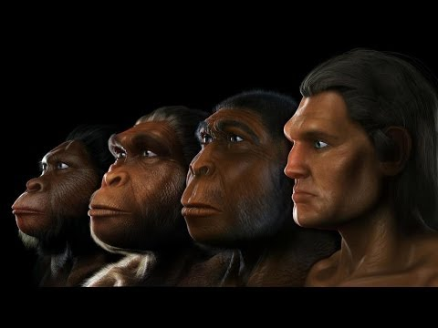 Human Evolution: Evidence of Our Ancestors - Science Documentary 2017