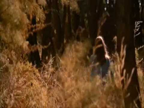 Badlands.by Terrence Malick, woods scene.