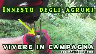 Download lagu Innesto degli agrumi - Vivere in campagna