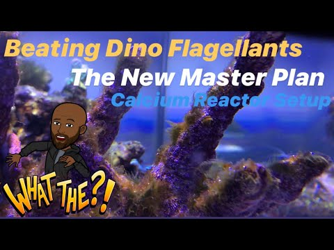 ep.17-|-beating-dino-flagellants---the-new-master-plan