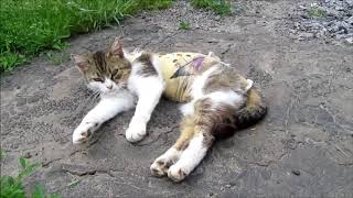 Будни кошки Лили после стерилизации. Кошке нравится свой пруд
