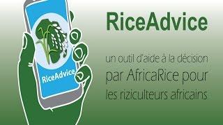 RiceAdvice : Un outil d'aide à la décision par AfricaRice pour les riziculteurs africains