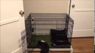 """Pooch Potty Trainer  """"lincoln"""""""
