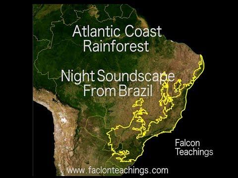 Brazil Rainforest near beach