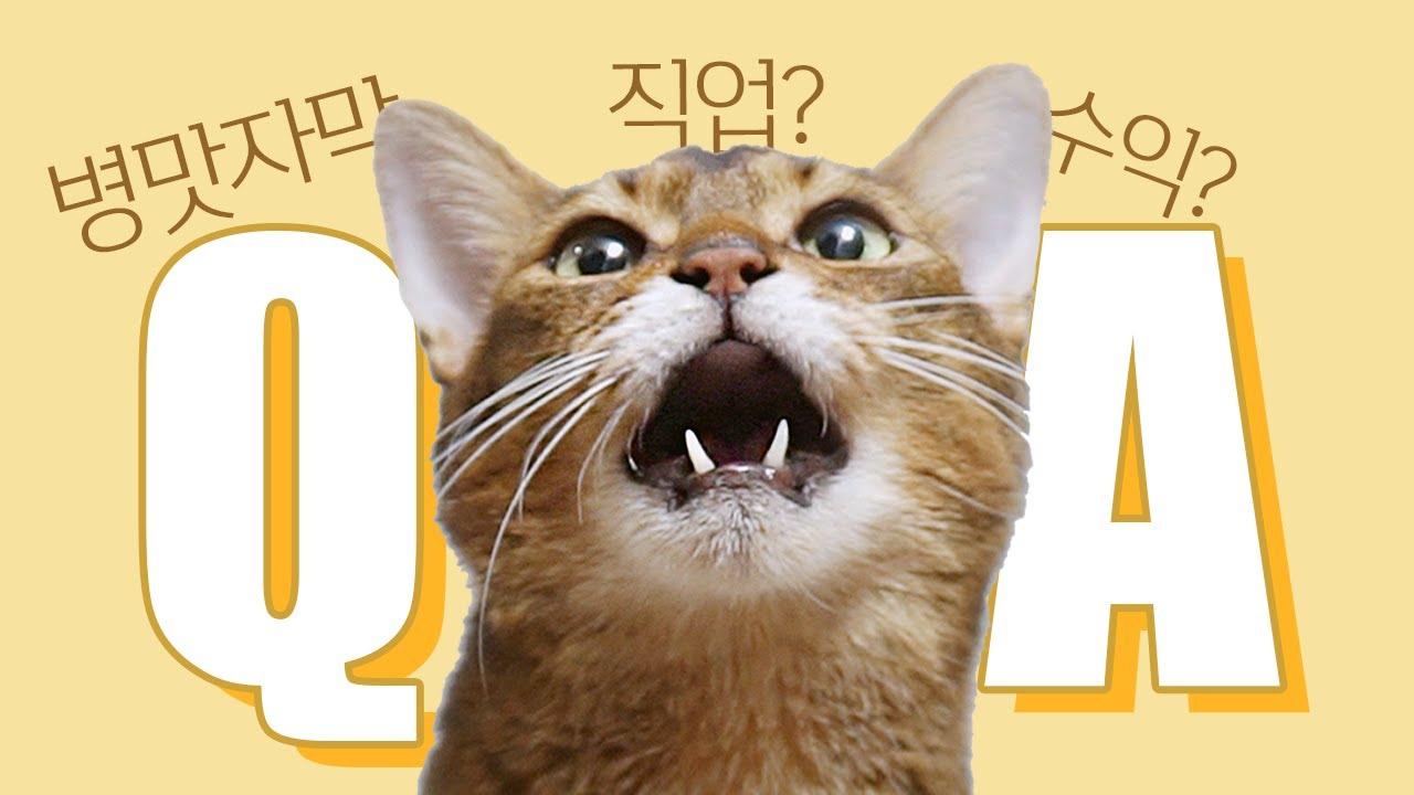 마일로 길냥이 때 성격은? 고양이 키우면서 후회한 적? 직업 도대체 무엇? 유튜브 시작한 이유? 수익? [10만 기념 Q&A]