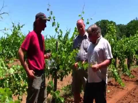 Exploring the Vines at Madrona Vineyards - Episode 2, Season 1