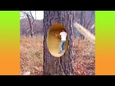 เขากำลังสร้างบ้านในต้นไม้หรือเปล่านะ? (รวมคลิปความพึงพอใจ)
