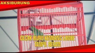 Top Hits -  Cucak Hijau Kembang Lambe Til Seram