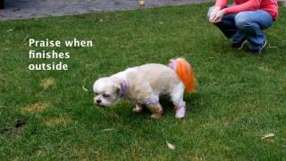 How to Potty Train any Dog or Puppy