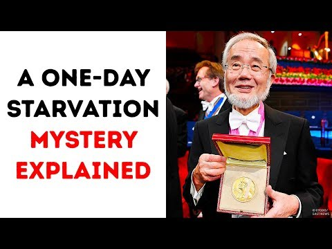 A One-Day Starvation Secret Got the Noble Prize.